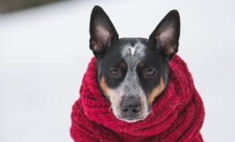 proteger-froid-chien